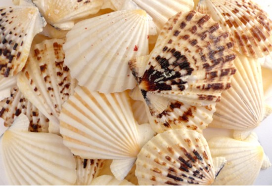 Radula Deniz Kabuğu 1 Kg