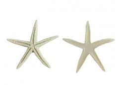 Deniz Yıldızı Polyester 1 Adet